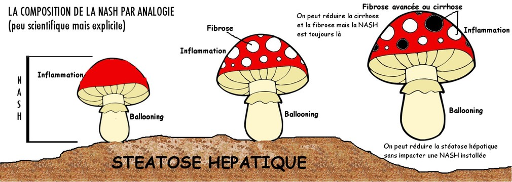 champignon analogy explain FR